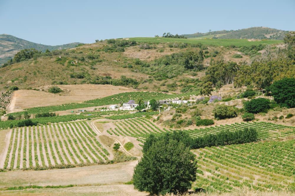 Das Weingut A.A. Badenhorst