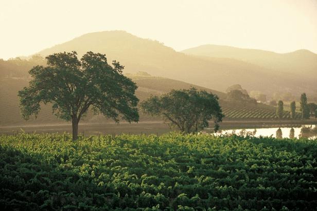 Weinberge von Veramonte