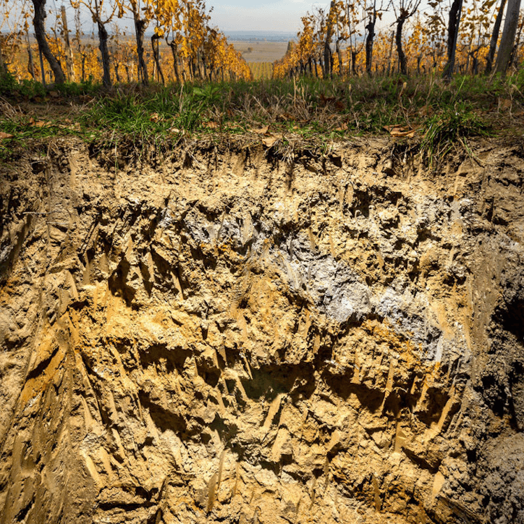 The mineral resources of Esterházy