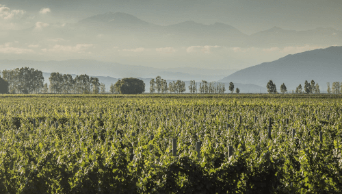 The vineyards of Dieter Meier in Argentina