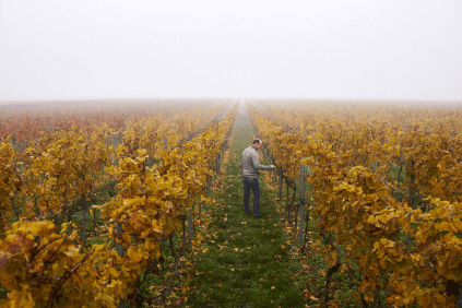 Inspection of the vines