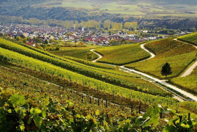 Uitzicht over de wijngaarden van het landgoed