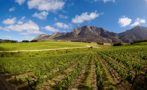 tokara-vineyards