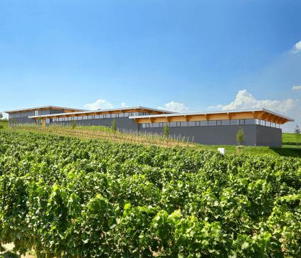 Dreissigacker winery