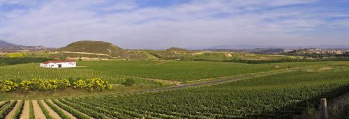 The vast vineyards of Bodegas Muga