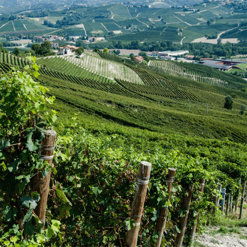 Die Einzellage Fassati vom Weingut Borgogno