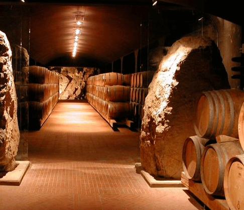 Barrique cellar Isole e Olena