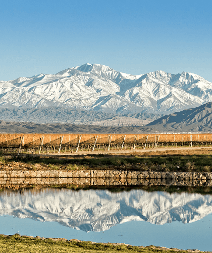The vineyards of Alamos in Mendoza
