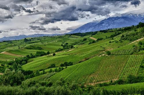 Vineyards in Abruzzo of Tenuta Ulisse