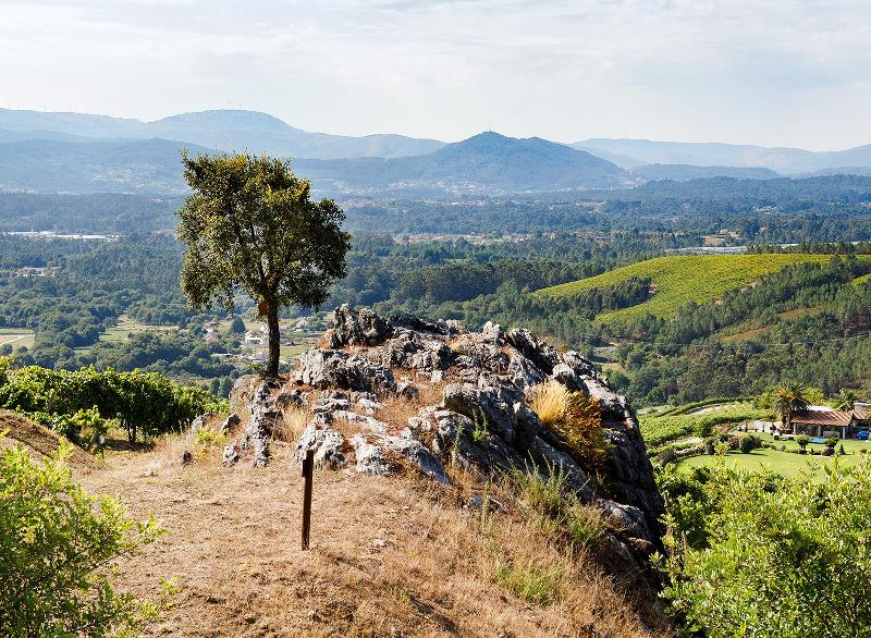 Altos de Torona vineyards