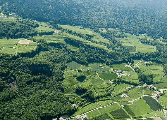 Duerer Weg vineyards