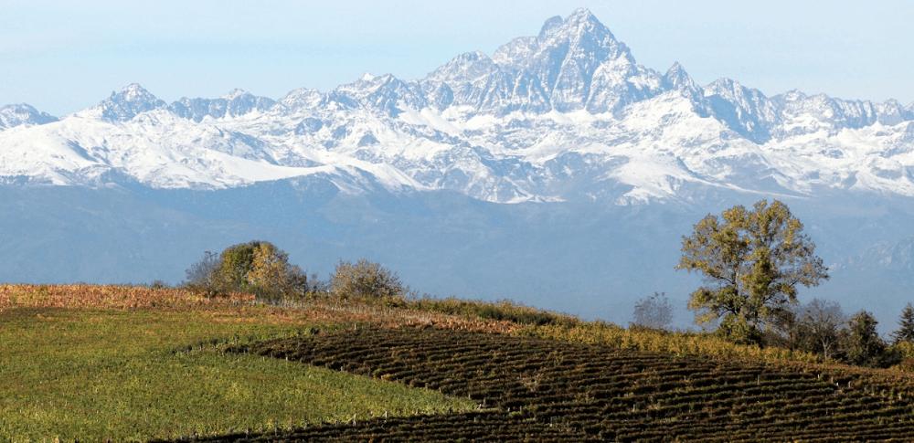 Vineyards of G.D. Vajra at altitude
