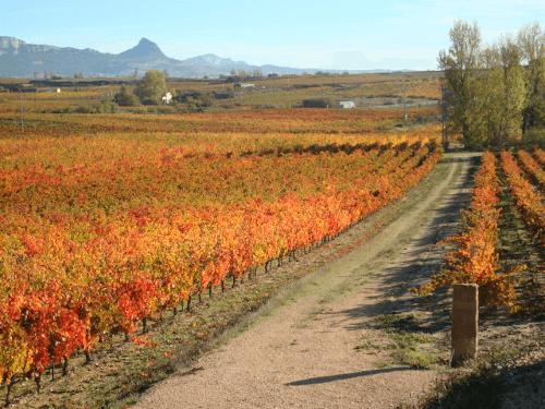 The vineyards of Torre de Oña