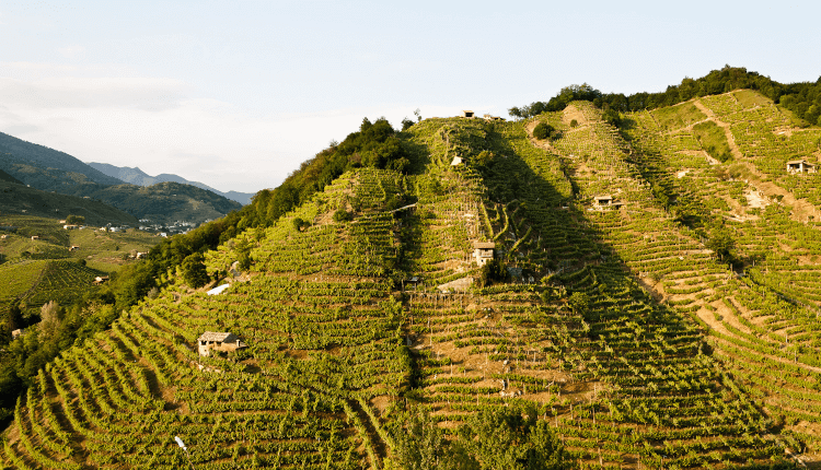 Bisol's steep hills of Valdobbiadene
