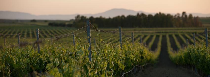 Weingut Argiolas Sardinien Weinberge