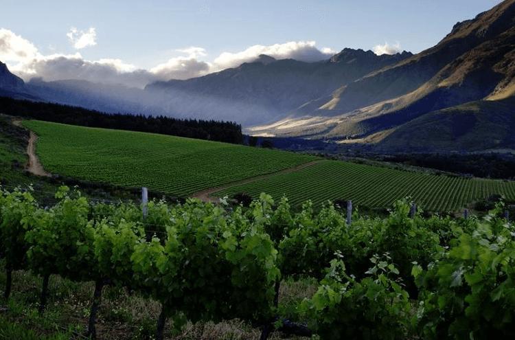 Neil Ellis Vineyards in Stellenbosch