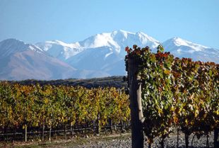 The vineyards of Bodegas Caro in Mendoza