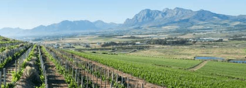 Fairview-Vineyards-1