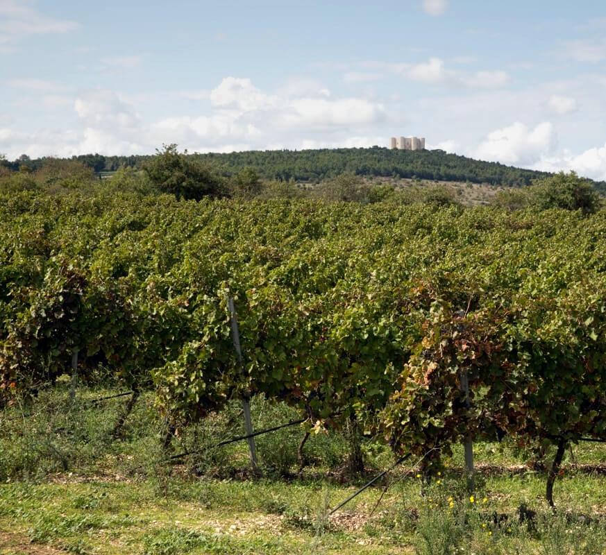 Torrevento vineyards Ottogona