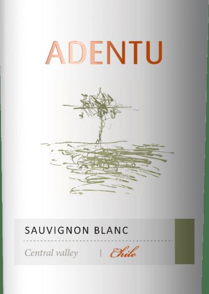 De Adentu Sauvignon Blanc van Vina Siegel schittert in het glas in een helder lichtgeel. De neus onthult bezielende aroma's van verse citrusvruchten met nuances van sinaasappel, grapefruit en de fijnste nuances van kruiden. Het gehemelte wordt verwend door het vitale samenspel van fruit en zuurgraad. Aanbevolen voedsel voor deAdentu Sauvignon Blanc Deze zuivere witte wijn uit Chili is een prima begeleider bij Cassoulet, vers brood met roomkaasvariaties of ook bij groenten met dipsaus.