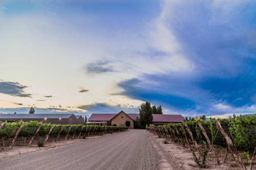 The Susana Balbo Winery in Mendoza