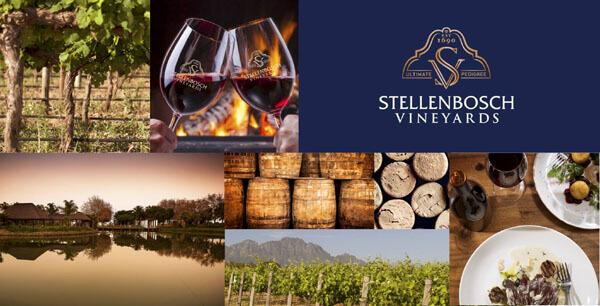 stellenbosch_vineyards