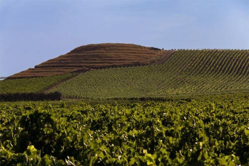 Dispensa vineyards from Planeta